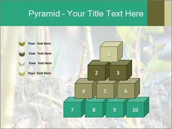 Japanese knotweed PowerPoint Templates - Slide 31