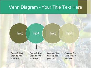 Japanese knotweed PowerPoint Templates - Slide 32