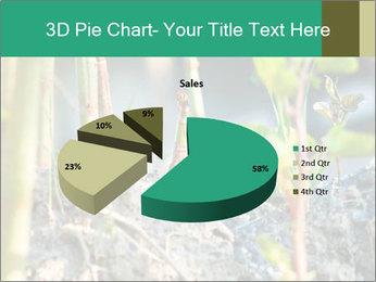 Japanese knotweed PowerPoint Templates - Slide 35