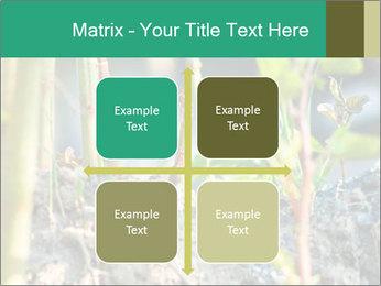 Japanese knotweed PowerPoint Templates - Slide 37