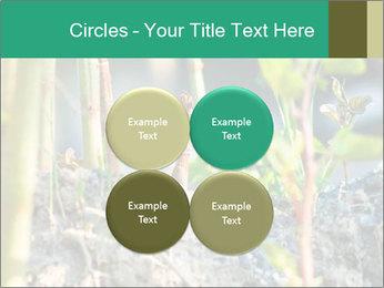Japanese knotweed PowerPoint Templates - Slide 38