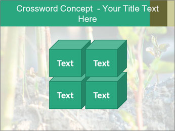 Japanese knotweed PowerPoint Templates - Slide 39