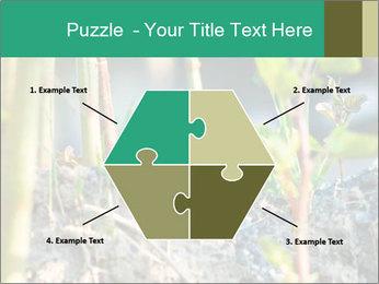 Japanese knotweed PowerPoint Templates - Slide 40
