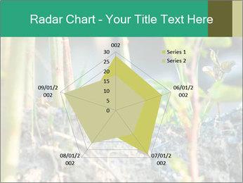 Japanese knotweed PowerPoint Templates - Slide 51
