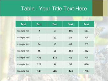 Japanese knotweed PowerPoint Templates - Slide 55