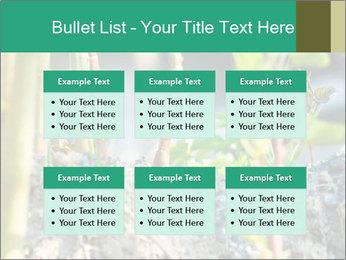 Japanese knotweed PowerPoint Templates - Slide 56