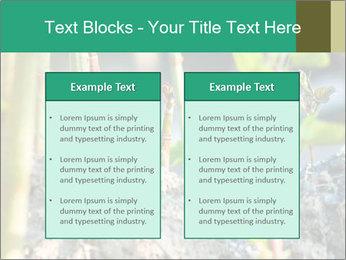 Japanese knotweed PowerPoint Templates - Slide 57