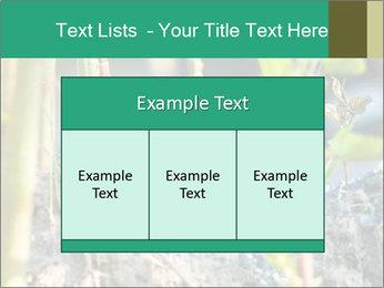 Japanese knotweed PowerPoint Templates - Slide 59