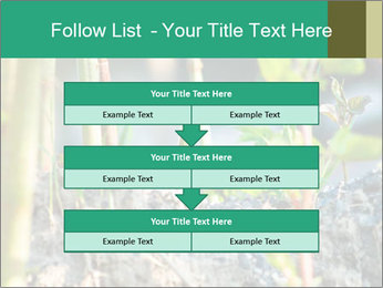 Japanese knotweed PowerPoint Templates - Slide 60