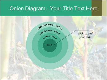 Japanese knotweed PowerPoint Templates - Slide 61