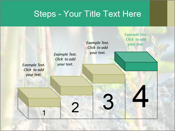 Japanese knotweed PowerPoint Templates - Slide 64