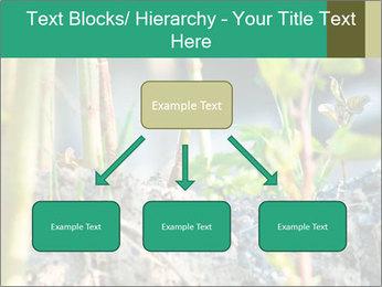 Japanese knotweed PowerPoint Templates - Slide 69