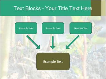 Japanese knotweed PowerPoint Templates - Slide 70