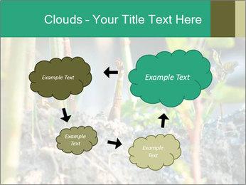 Japanese knotweed PowerPoint Templates - Slide 72
