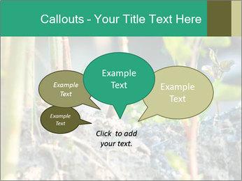 Japanese knotweed PowerPoint Templates - Slide 73