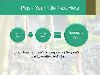 Japanese knotweed PowerPoint Templates - Slide 75