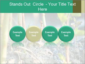 Japanese knotweed PowerPoint Templates - Slide 76