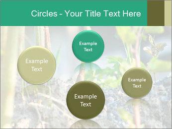 Japanese knotweed PowerPoint Templates - Slide 77
