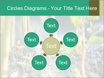 Japanese knotweed PowerPoint Templates - Slide 78