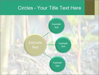 Japanese knotweed PowerPoint Templates - Slide 79