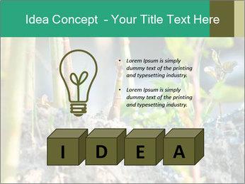 Japanese knotweed PowerPoint Templates - Slide 80