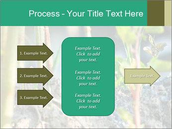 Japanese knotweed PowerPoint Templates - Slide 85