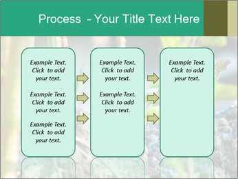 Japanese knotweed PowerPoint Templates - Slide 86