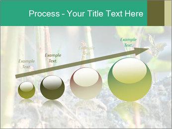 Japanese knotweed PowerPoint Templates - Slide 87