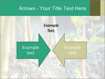 Japanese knotweed PowerPoint Templates - Slide 90