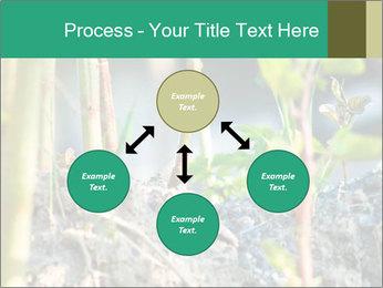 Japanese knotweed PowerPoint Templates - Slide 91