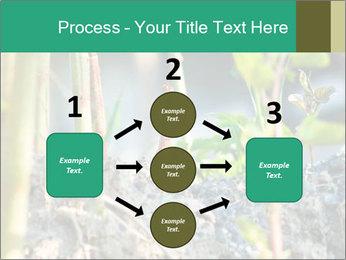 Japanese knotweed PowerPoint Templates - Slide 92