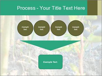 Japanese knotweed PowerPoint Templates - Slide 93