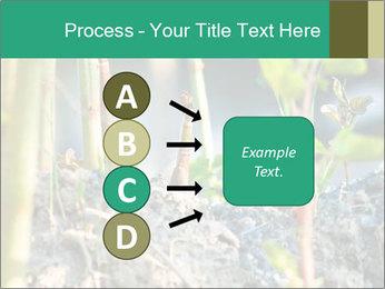 Japanese knotweed PowerPoint Templates - Slide 94