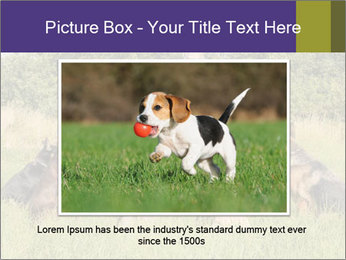 A group of dogs PowerPoint Templates - Slide 15