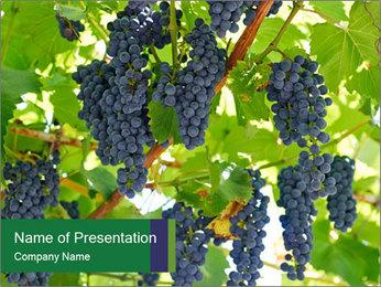 Ripening grape PowerPoint Template - Slide 1