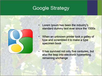 Ripening grape PowerPoint Template - Slide 10