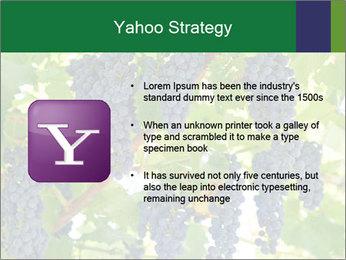 Ripening grape PowerPoint Template - Slide 11