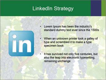 Ripening grape PowerPoint Template - Slide 12