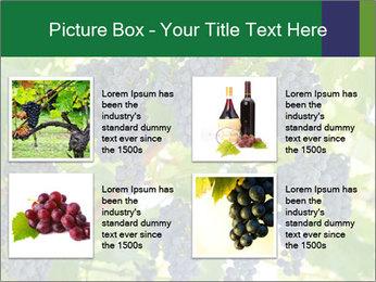 Ripening grape PowerPoint Template - Slide 14