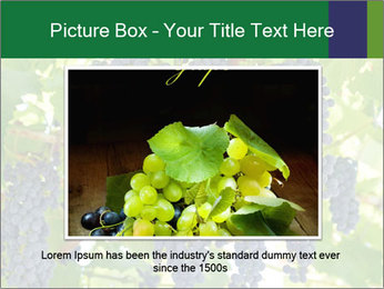 Ripening grape PowerPoint Template - Slide 15