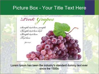 Ripening grape PowerPoint Template - Slide 16