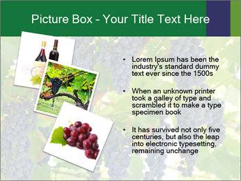 Ripening grape PowerPoint Template - Slide 17