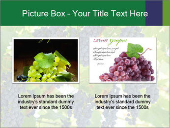 Ripening grape PowerPoint Template - Slide 18
