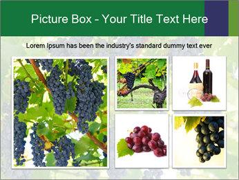 Ripening grape PowerPoint Template - Slide 19