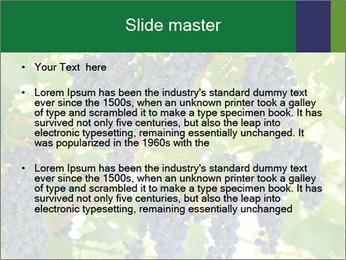 Ripening grape PowerPoint Template - Slide 2