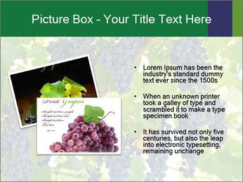 Ripening grape PowerPoint Template - Slide 20