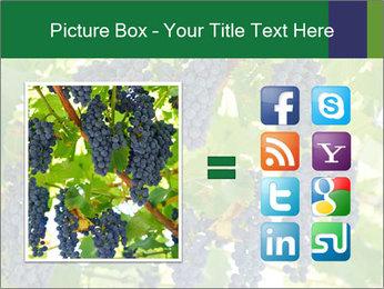 Ripening grape PowerPoint Template - Slide 21