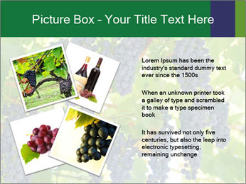Ripening grape PowerPoint Template - Slide 23