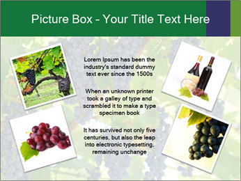 Ripening grape PowerPoint Template - Slide 24