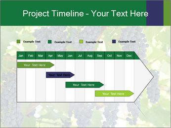 Ripening grape PowerPoint Template - Slide 25